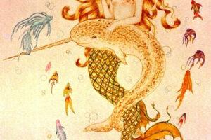 mermaid_&_narwhal